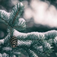 Holiday seo guide - evergreen tree with snow